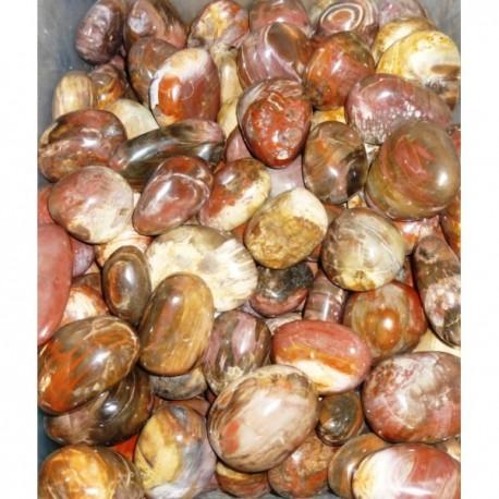 Galets en Bois fossile pour Canon en Shungite