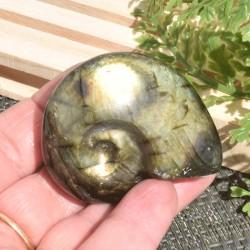 Labradorite taillée façon ammonite AMLB6