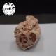 Bois fossile brut BFB03